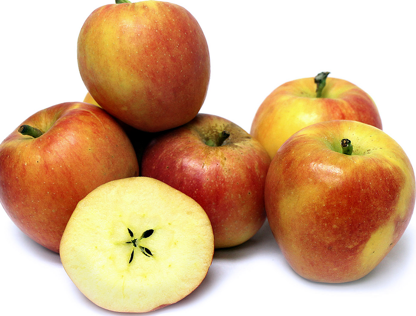 Exciting new pome fruit varieties