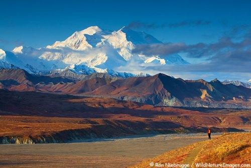 A hiker enjoying the view of Mt. McKinley, Denali National Park, Alaska. (model released)