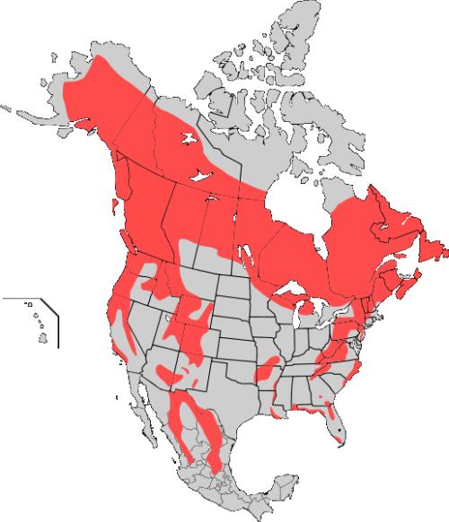American_Black_bear_map