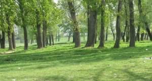 cartodrom kartodrom copaci parc zavoi