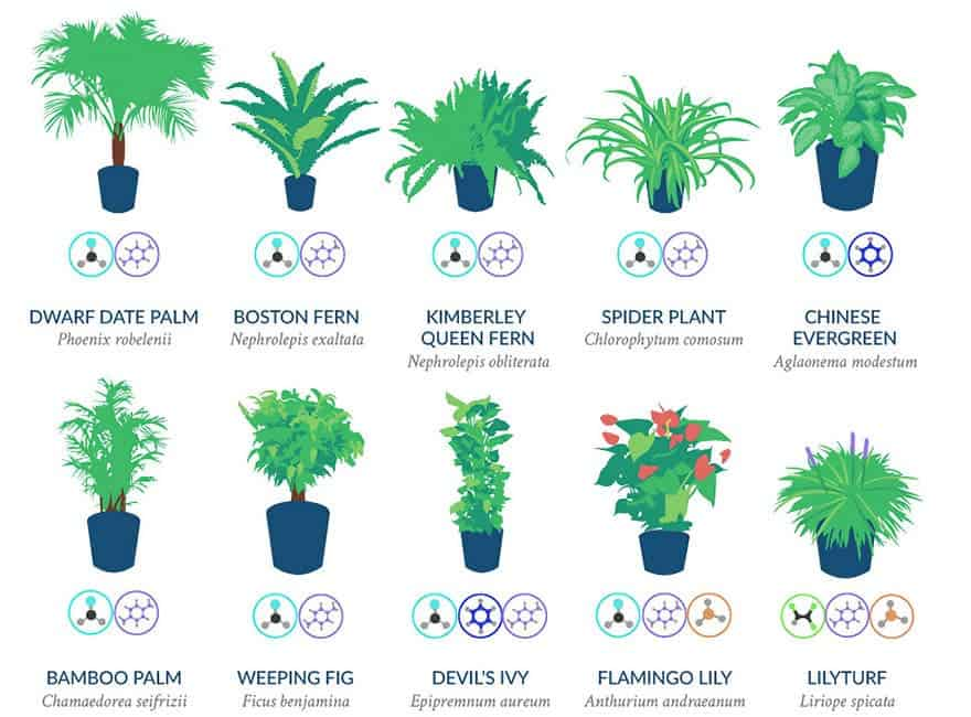 NASA Have Identified The Best Air-Filtering Houseplants