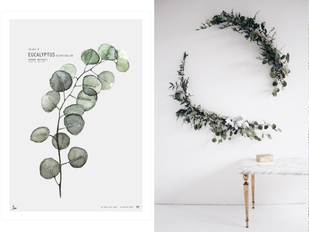 eukaliptusb