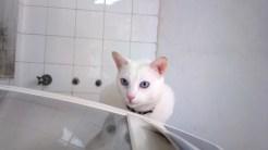 Ticolino inspeciona a máquina de lavar