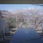 """On the Cherry Blossoms"" House - Photograph by Kouichi Torimura"