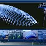 Physalia's Biostructure