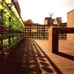 Roof (Image Courtesy Fernando Cordero)
