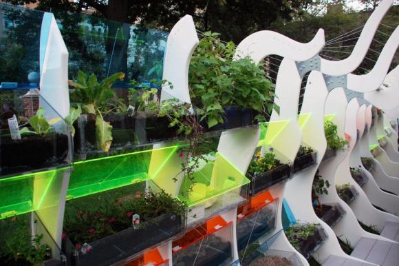 Planted cold frame (Image Courtesy Brent Wahl)