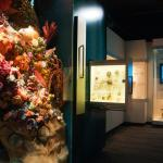 South Australian Museum Biodiversity Gallery