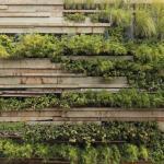 PHOTOGRAPHY green wall detail : Image Courtesy © Juan Solano Ojasi