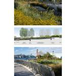 Freshwater wetland, section and photographs - Photo Credit: Section: Starr Whitehouse Landscape Architects and Planner, PLLC © New York City, NYC Parks; Photos: Starr Whitehouse Landscape Architects and Planners PLLC