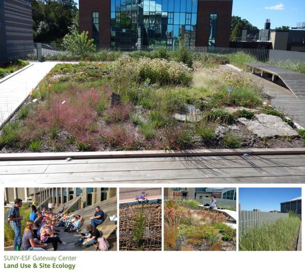 Intensive green roof, supports restoration landscape teaching & research, Image Courtesy © Architerra Inc