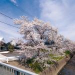 Image Courtesy © Shigetomo Mizuno