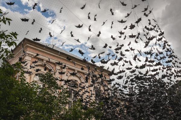 Image Courtesy © Uldis Lapins