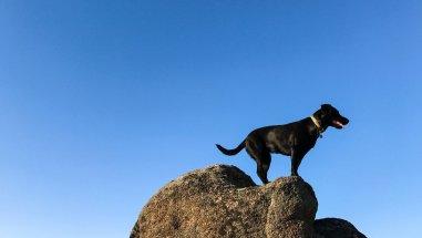 adventure_dog_iphone_7