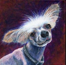 Hubble chinese crested portrait