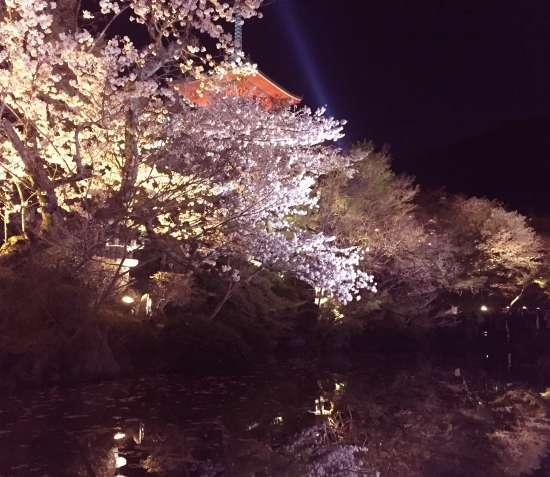 清水寺三重塔と放生池ライトアップ