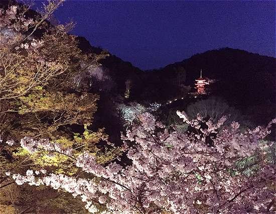 清水寺 子安塔ライトアップ