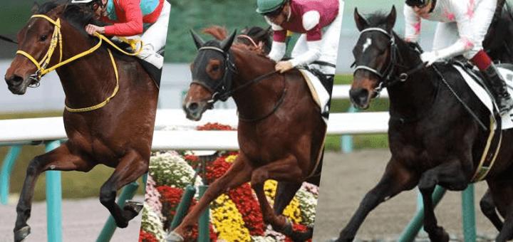 derby_dark_horse