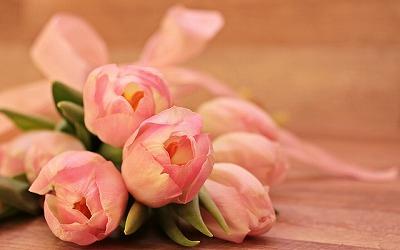 s-tulips-2068688_640