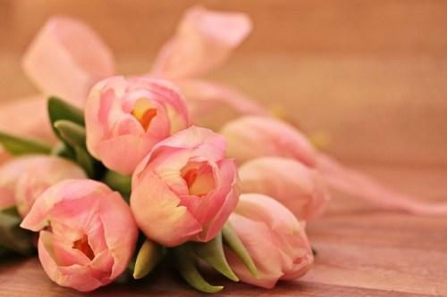 tulips-2068688_640