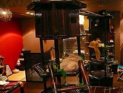 【大阪】 抱っこできる猫カフェは『ぐるぐる堂』がオススメ!!