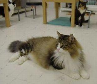【名古屋】 丸の内の猫カフェ『ひとやすみ』がオススメ♪