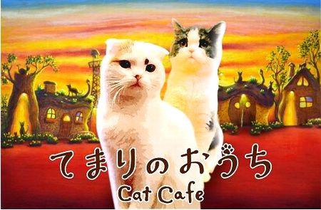 てまりのおうち 猫カフェ