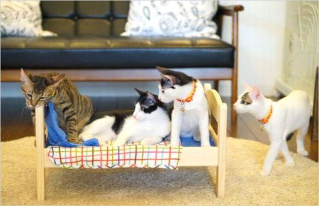 保護猫カフェのアクセス