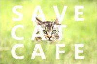 大阪の保護猫カフェ 『SAVE CAT CAFE』紹介!営業時間は?