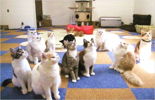 抱っこのできる東京の猫カフェを紹介!