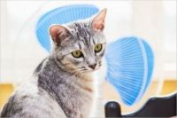 夏に猫が吐くのは熱中症が原因かも!?応急処置について