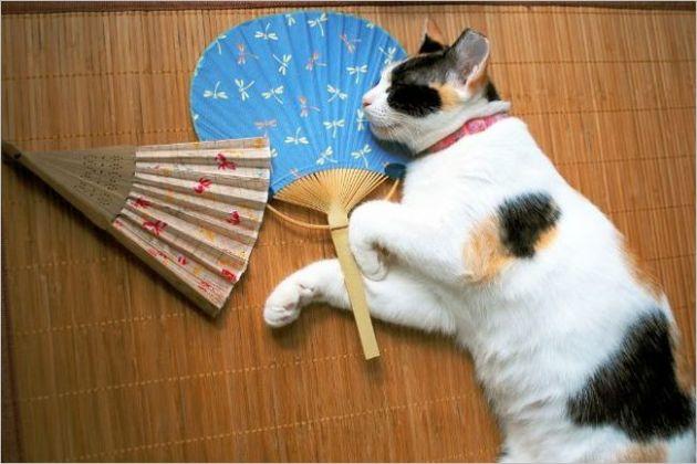 猫の熱中症