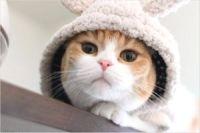 福岡の猫カフェNYAON(にゃおん)が人気♪料金や営業時間はココ