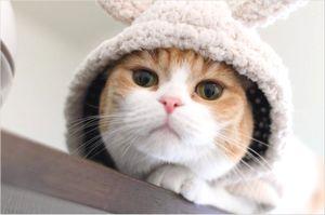 猫カフェ 婚活パーティー