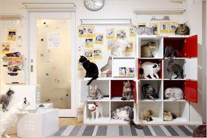 猫カフェ「ひなたぼっこ」