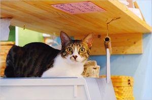 保護猫カフェDearCat