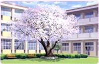 浦の星女学院・中庭【春】