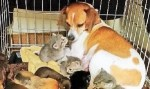 母ネコを亡くした3匹の子ネコ動画!母親代わりの優しいワンちゃん♪
