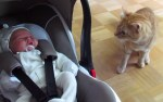 興味ある赤ちゃんに近づいて、猫が戸惑う理由は何?