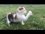 原っぱで途方に暮れる子猫!肉球の置き場に悶絶