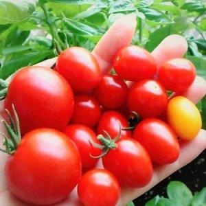 tomato-new018