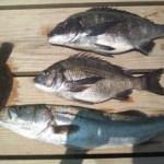 [敦賀 筏釣り] 釣り筏やまもと 福井県敦賀市手の浦 筏釣り・旅館