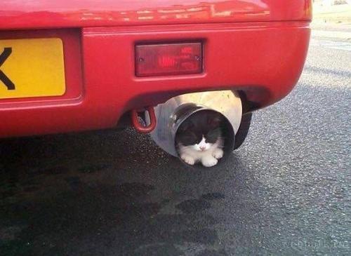 狭いとこ好き猫1