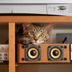 狭いとこ好き猫12