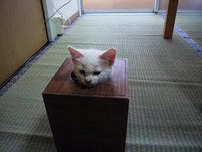 狭いとこ好き猫3