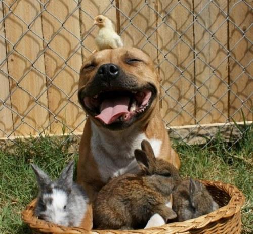 幸せそうな動物たち32