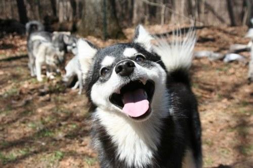 幸せそうな動物たち7