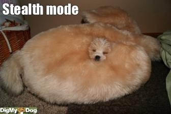 隠れんぼ動物32