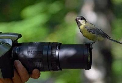 カメラマンと仲良くなってしまった動物達7