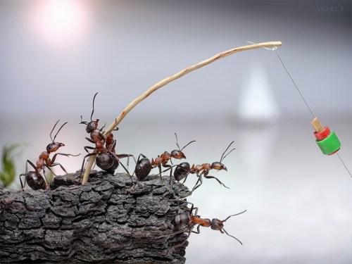 蟻アート6